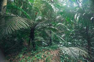 végétation de forêt tropicale luxuriante