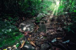 rochers dans la forêt