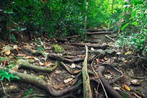 végétation forestière luxuriante