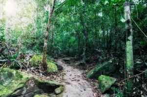 rochers et végétation luxuriante de la forêt tropicale