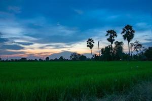 coucher de soleil sur le terrain photo