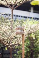 lampe à bougie dans un jardin photo