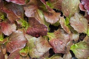 gros plan, de, feuilles rouges et vertes