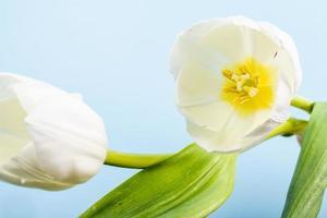gros plan, de, fleurs blanches