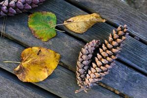 pommes de pin et feuilles sur une table en bois photo