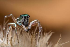 araignée brune sur une fleur photo