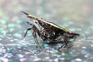 araignée de fond macro