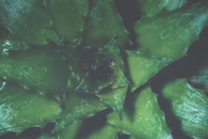 fond de feuille verte, gros plan