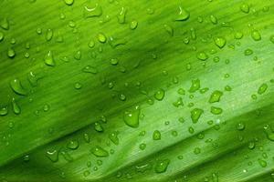 fond de feuille humide