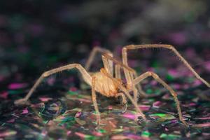 araignée sur une surface humide