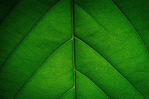 fond de feuille verte photo