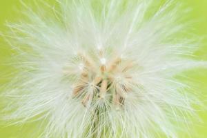 fleur sauvage, photo en gros plan