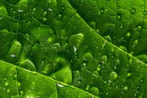 gouttes d'eau sur une feuille verte