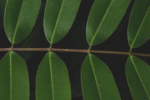 feuilles vertes avec fond sombre