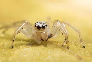 araignée sur une surface humide photo