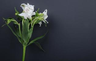 Fleurs d'alstroemeria blanches sur fond noir avec espace copie photo