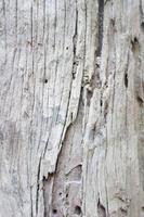 fond en bois blanc photo
