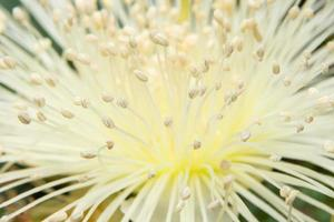fleur blanche, photo en gros plan