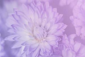 fond de gros plan fleur