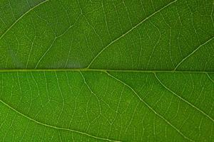 fond de feuille verte