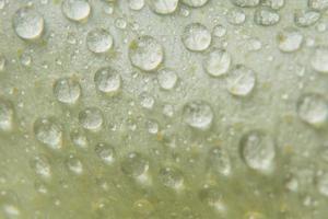 gouttes d'eau sur les pétales de fleurs