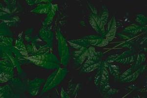 fond de feuilles sombres