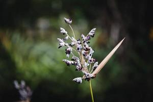 gros plan de fleurs