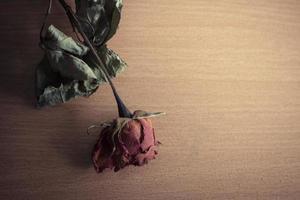 rose sèche sur une table en bois photo