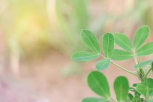 gros plan, de, feuilles vertes, à, espace copie