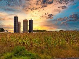Upton, Québec, Canada, 23 septembre 2018 - champs de maïs sous un coucher de soleil