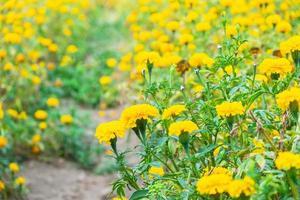 fleurs jaunes en été photo