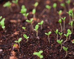 semis dans un bac de plantation