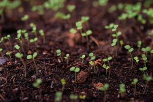semis dans un bac de plantation photo