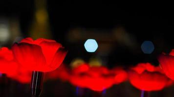 lumières de fleurs rouges photo