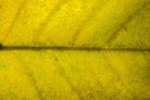 motif de feuille jaune, gros plan photo
