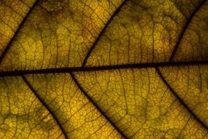 gros plan feuille jaune