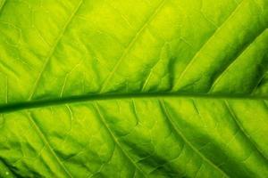 motif d'une feuille verte photo