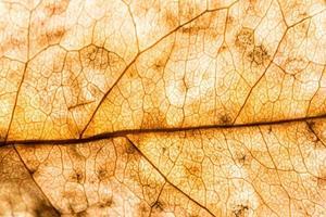 texture de fond d'une feuille