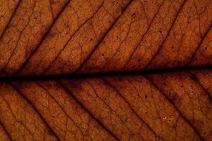 gros plan feuille brune photo