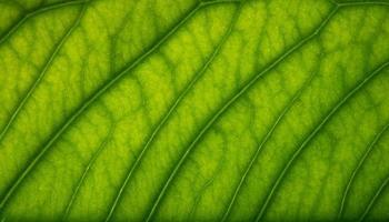 motif de feuilles marron