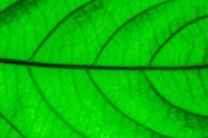 gros plan, de, a, feuille verte