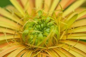 gros plan fleur jaune photo