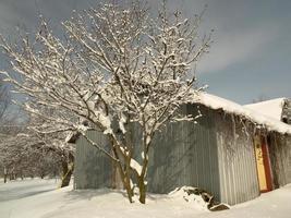 des branches d'arbres et une grange couverte de neige photo