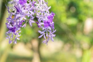fleur violette sur fond vert