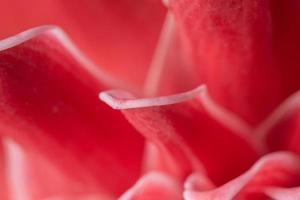 fond de pétale de fleur rose