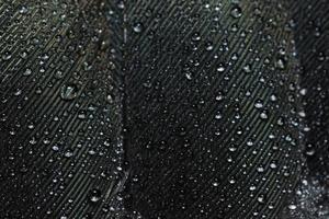 gouttes d'eau sur une plume photo