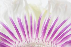 fond de fleurs violettes et blanches