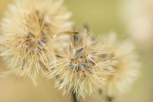 photo en gros plan de fleurs sauvages