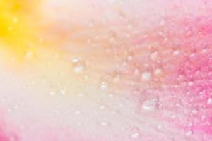 gouttelettes d'eau sur les pétales d'une rose rose