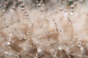 gouttes d'eau sur une fleur